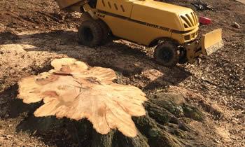 Stump Removal in Brandon FL Stump Removal Services in Brandon FL Stump Removal Professionals Brandon FL Tree Services in Brandon FL