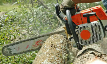 Tree Removal in Brandon FL Tree Removal Quotes in Brandon FL Tree Removal Estimates in Brandon FL Tree Removal Services in Brandon FL Tree Removal Professionals in Brandon FL Tree Services in Brandon FL